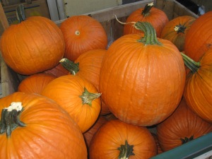 Old Fashioned Pumpkins